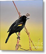 Radiant Red-winged Metal Print by Al Powell Photography USA
