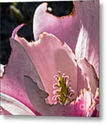 Ragged Magnolia Metal Print by Kate Brown