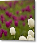 Rain Drops Keep Falling On My Tulips Metal Print by Nick  Boren