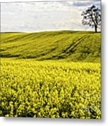 Rape Landscape With Lonely Tree Metal Print by Heiko Koehrer-Wagner