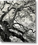 Reaching For Heaven Metal Print by Karen Wiles