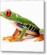 Red-eye Tree Frog 4 Metal Print by Lanjee Chee