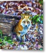 Red Fox At Home Metal Print by John Haldane