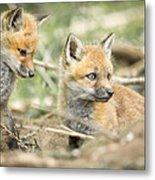 Red Fox Kits Metal Print by Everet Regal