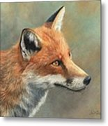 Red Fox Portrait Metal Print by David Stribbling