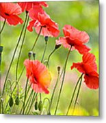 Red Poppies Metal Print by FunCards