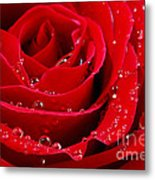 Red Rose Metal Print by Elena Elisseeva