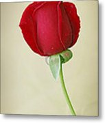 Red Rose On White Metal Print by Sandy Keeton