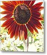 Red Sunflower Glow Metal Print by Kerri Mortenson