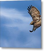 Red Tailed Hawk Soaring Metal Print by Bill Wakeley