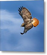 Red-tailed Hawk Soaring Square Metal Print by Bill Wakeley
