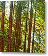 Redwood Wall Mural Panel 1 Metal Print by Artist and Photographer Laura Wrede