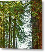 Redwood Wall Mural Panel 2 Metal Print by Artist and Photographer Laura Wrede