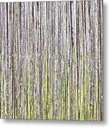 Reeds Background Metal Print by Tom Gowanlock