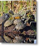 Reptile Refuge Metal Print by Al Powell Photography USA