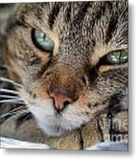 Rest Metal Print by Susan Smith