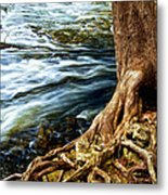 River Through Woods Metal Print by Elena Elisseeva