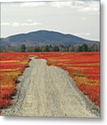 Road Through Autumn Blueberry Maine Metal Print by Scott Leslie