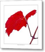 Roger's Red Grape Leaf Metal Print by Saxon Holt