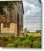 Rooster Turf Metal Print by Steve Harrington