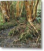 Roots Metal Print by James Brunker