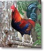 Roscoe The Rooster Metal Print by Sandra Chase