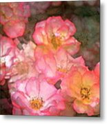 Rose 212 Metal Print by Pamela Cooper