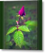 Rose Bud Metal Print by Brian Wallace