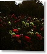 Rose Garden Metal Print by Lucy D