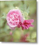 Rose Of Sharon Metal Print by Kay Pickens