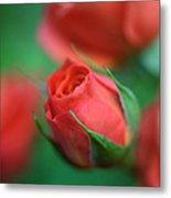 Rosebud  Metal Print by Kathy Yates
