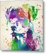 Rottweiler Splash Metal Print by Aged Pixel