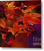 Royal Autumn A Metal Print by Jennifer Apffel