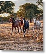 Running Horses Metal Print by Kristina Deane