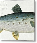 Salmon Metal Print by Andreas Ludwig Kruger