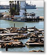 San Francisco Pier 39 Sea Lions 5d26103 Metal Print by Wingsdomain Art and Photography
