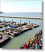 San Francisco Pier 39 Sea Lions 5d26109 Metal Print by Wingsdomain Art and Photography