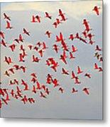 Scarlet Sky Metal Print by Tony Beck