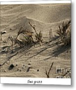 Sea Grass Metal Print by Artist and Photographer Laura Wrede
