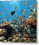 Sea Life Metal Print by Boon Mee