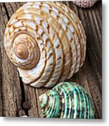 Sea Shells With Urchin  Metal Print by Garry Gay