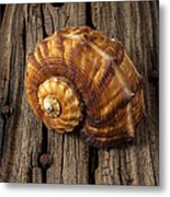Sea Snail Shell On Old Wood Metal Print by Garry Gay