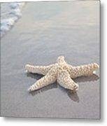 Sea Star Metal Print by Samantha Leonetti