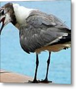 Seagull On The Rail Metal Print by Randall Weidner