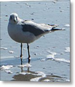 Seagull Metal Print by Silvie Kendall
