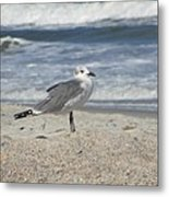 Seagulls At Fernandina 2 Metal Print by Cathy Lindsey