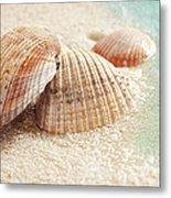 Seashells In The Wet Sand Metal Print by Sandra Cunningham