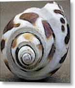 Seashells Spectacular No 2 Metal Print by Ben and Raisa Gertsberg