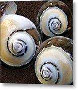 Seashells Spectacular No 23 Metal Print by Ben and Raisa Gertsberg