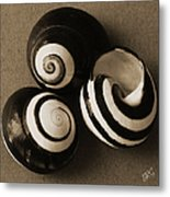 Seashells Spectacular No 27 Metal Print by Ben and Raisa Gertsberg